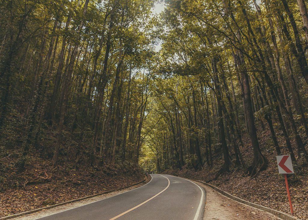 Bohol Man-made Forest