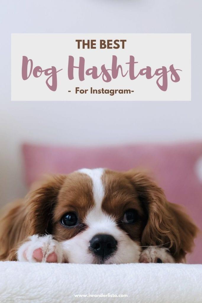 Dog hashtags for instagram